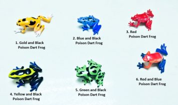 Poison Dart Frog Collection 6 type Labelled