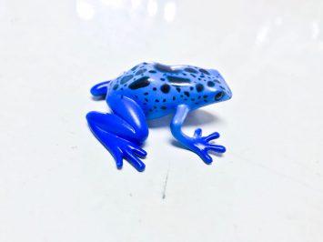 poison dart frog blue and black