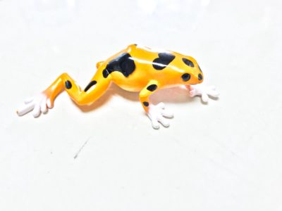 poison dart frog gold and black