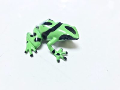 poison dart frog green and black