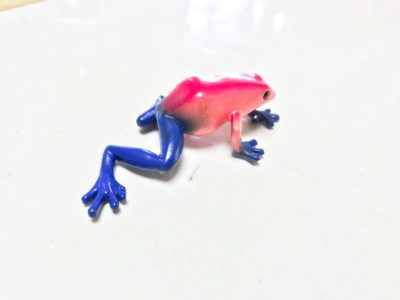 poison dart frog red and blue