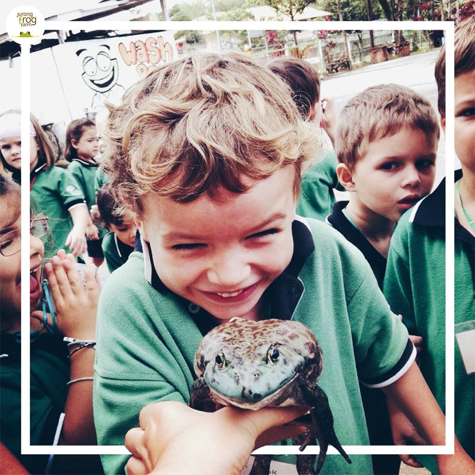 German European School boy touching frog