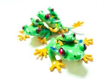 Red-eye tree frog 2
