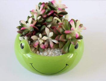 frog pot small 1 14.1