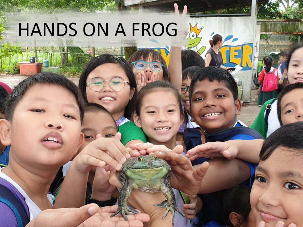Hands on a frog